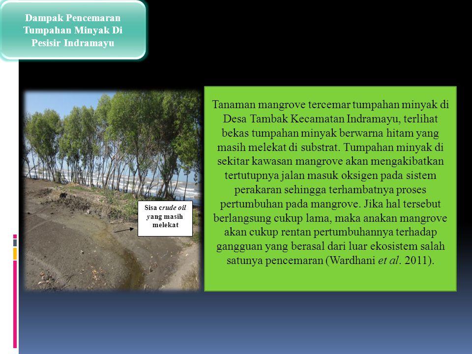 Dampak Pencemaran Tumpahan Minyak Di Pesisir Indramayu