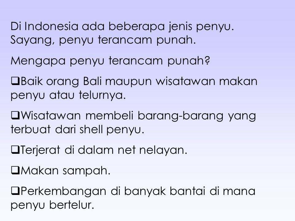 Di Indonesia ada beberapa jenis penyu. Sayang, penyu terancam punah.