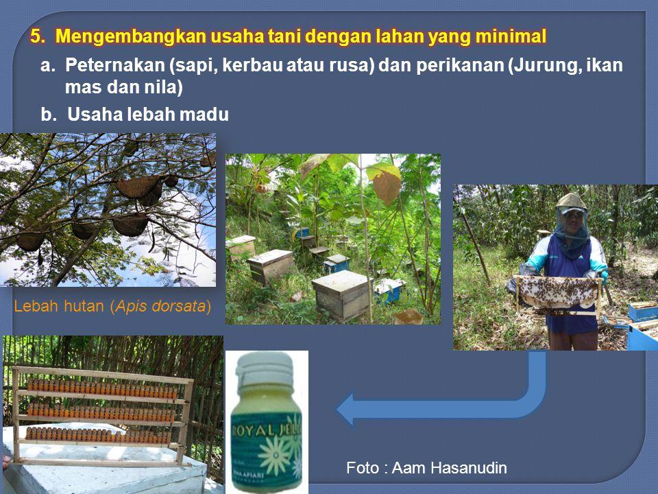 Lebah hutan (Apis dorsata)