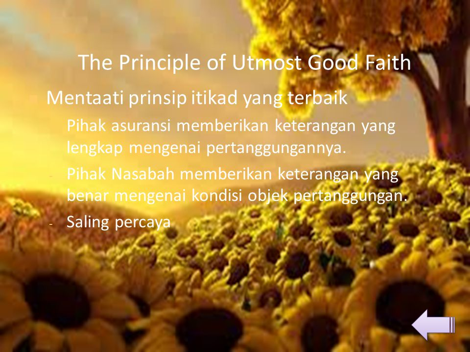 The Principle of Utmost Good Faith
