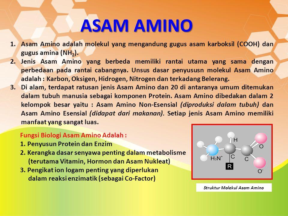 Struktur Molekul Asam Amino