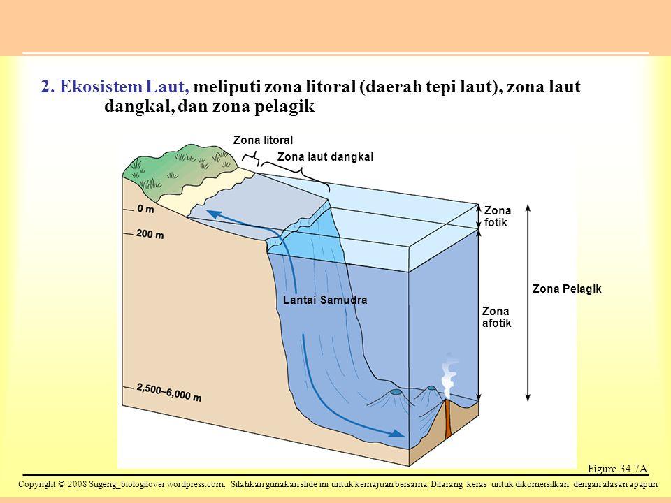 2. Ekosistem Laut, meliputi zona litoral (daerah tepi laut), zona laut dangkal, dan zona pelagik
