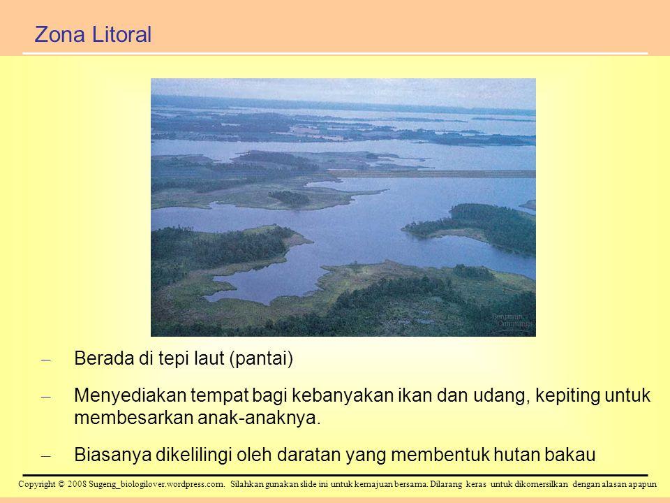 Zona Litoral Berada di tepi laut (pantai)