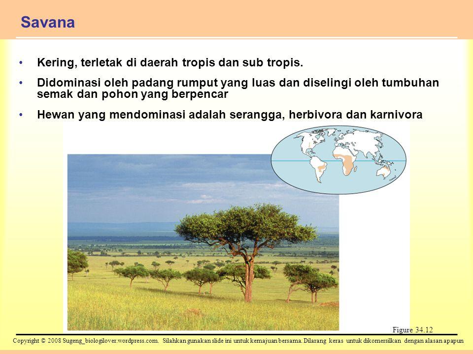 Savana Kering, terletak di daerah tropis dan sub tropis.