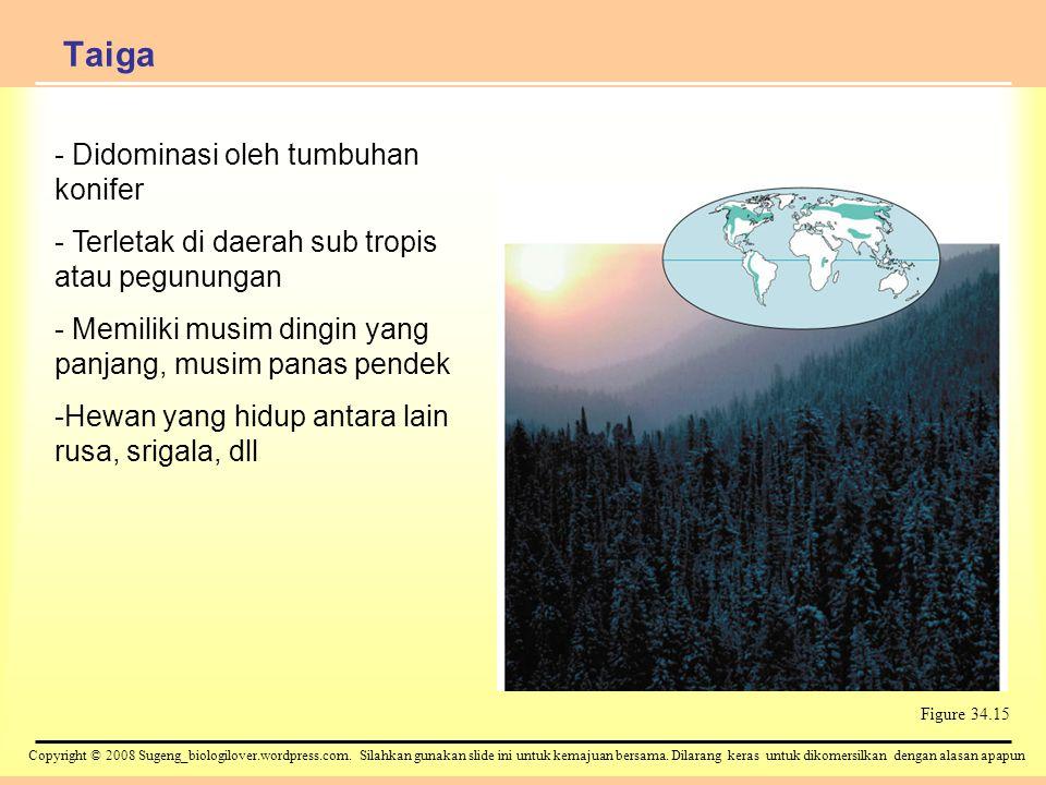 Taiga Didominasi oleh tumbuhan konifer