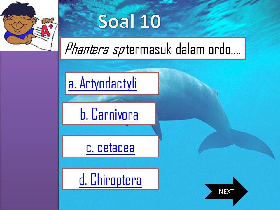 Phantera sp termasuk dalam ordo….