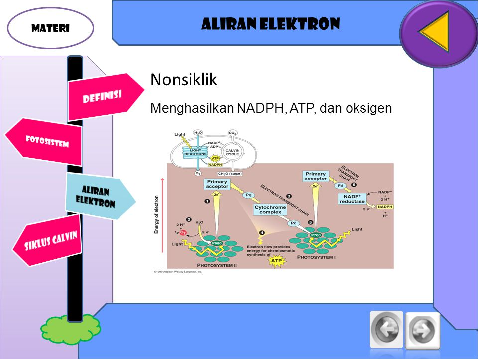 Nonsiklik Aliran elektron Menghasilkan NADPH, ATP, dan oksigen MATERI
