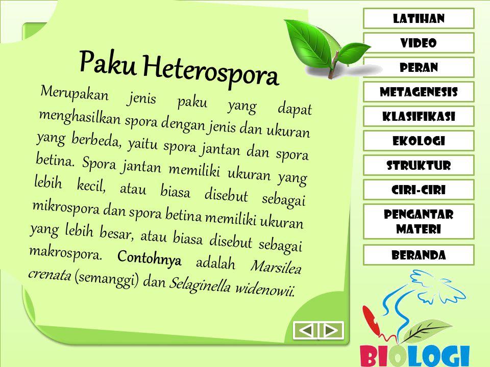Paku Heterospora