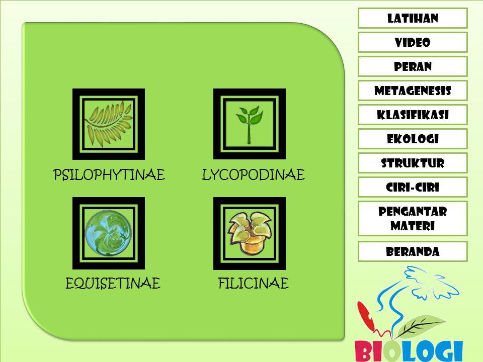PSILOPHYTINAE LYCOPODINAE EQUISETINAE FILICINAE