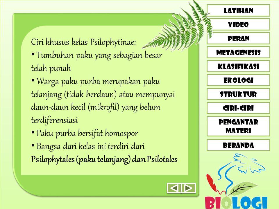 Ciri khusus kelas Psilophytinae: