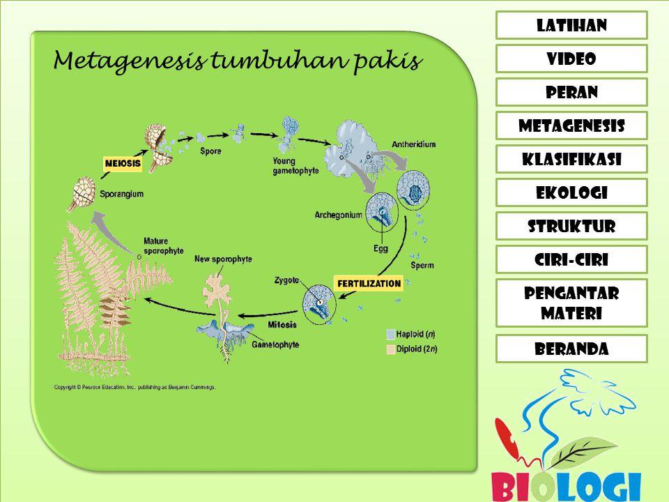 Metagenesis tumbuhan pakis