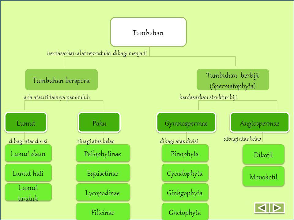 Tumbuhan Tumbuhan berspora Tumbuhan berbiji (Spermatophyta) Lumut Paku