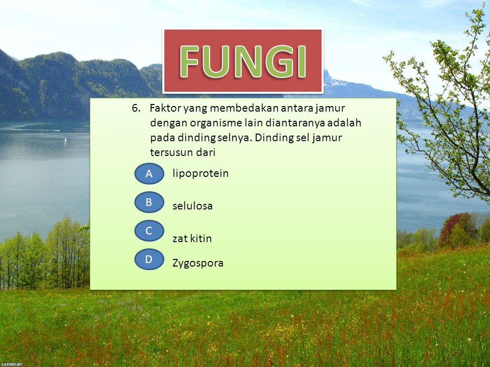 6. Faktor yang membedakan antara jamur dengan organisme lain diantaranya adalah pada dinding selnya. Dinding sel jamur tersusun dari