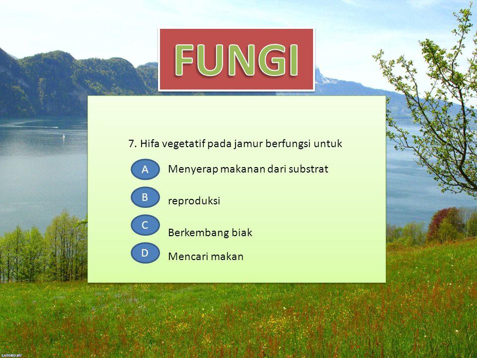 7. Hifa vegetatif pada jamur berfungsi untuk