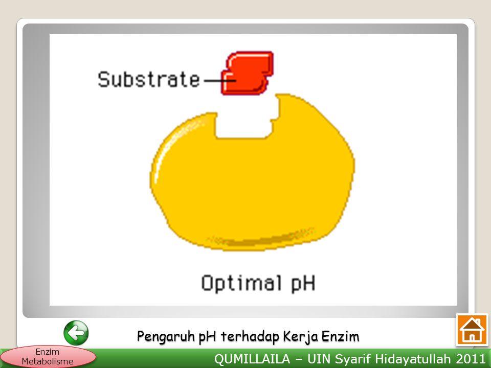Pengaruh pH terhadap Kerja Enzim