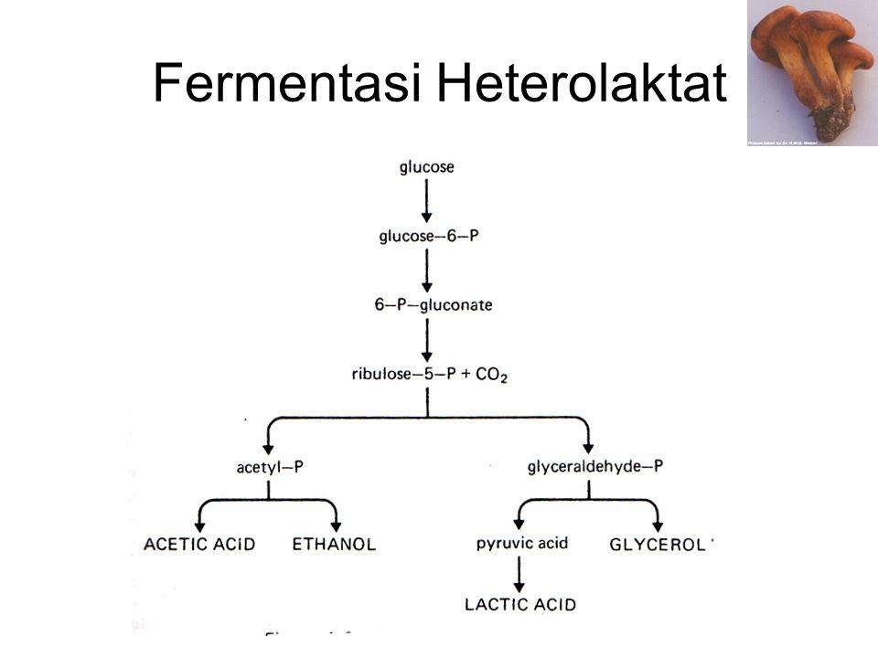Fermentasi Heterolaktat