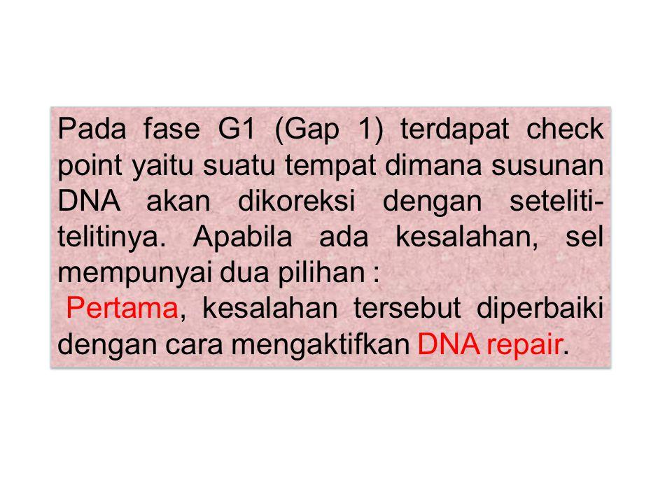 Pada fase G1 (Gap 1) terdapat check point yaitu suatu tempat dimana susunan DNA akan dikoreksi dengan seteliti-telitinya. Apabila ada kesalahan, sel mempunyai dua pilihan :