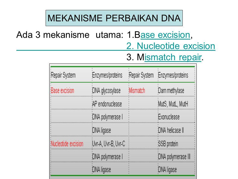 MEKANISME PERBAIKAN DNA