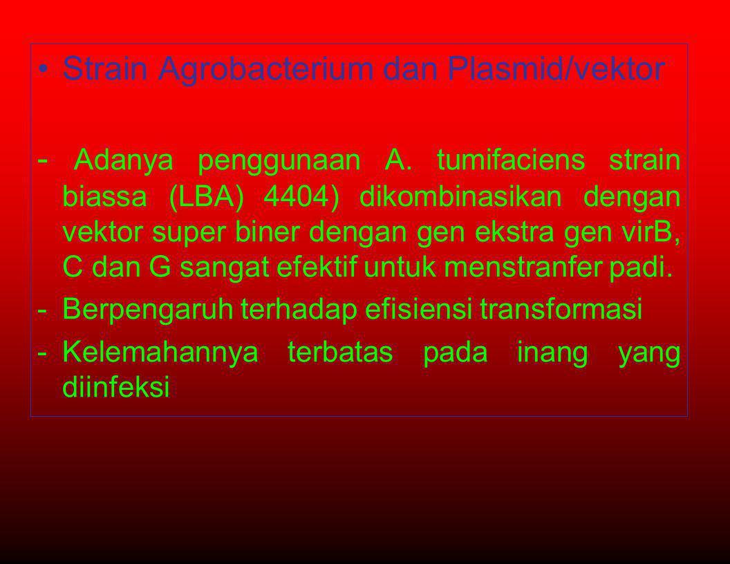 Strain Agrobacterium dan Plasmid/vektor