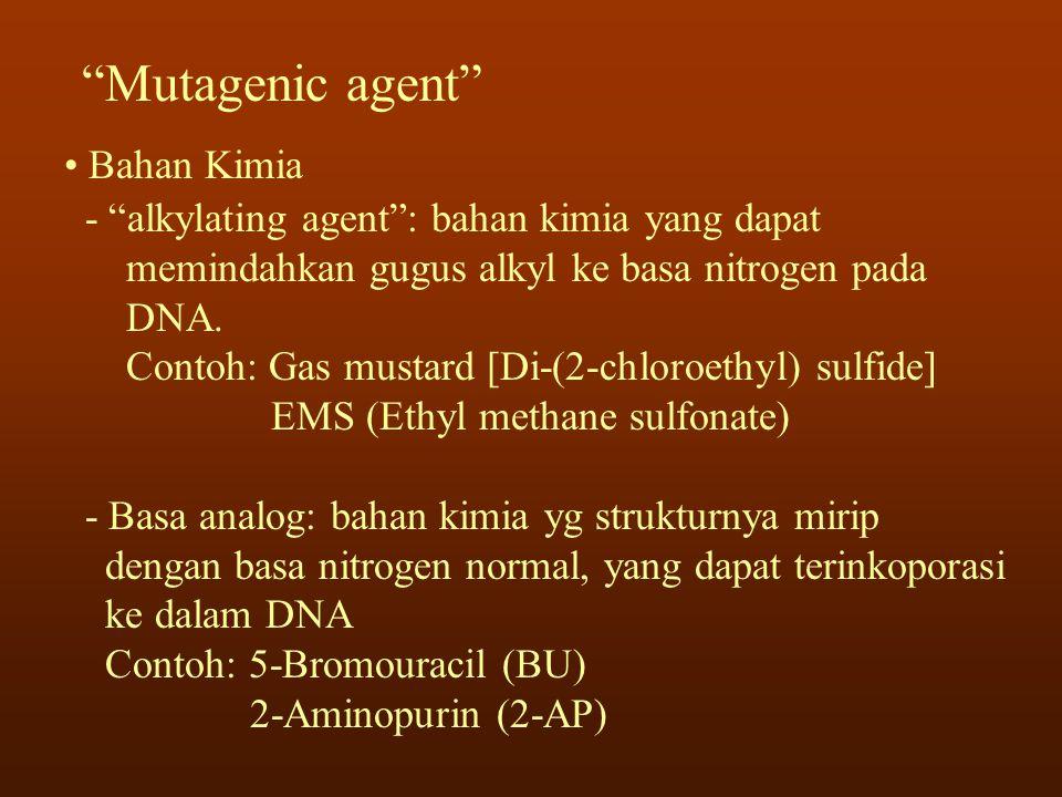 Mutagenic agent Bahan Kimia
