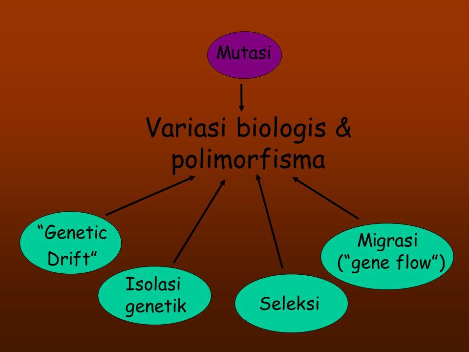 Variasi biologis & polimorfisma