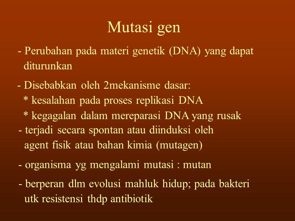 Mutasi gen Perubahan pada materi genetik (DNA) yang dapat diturunkan