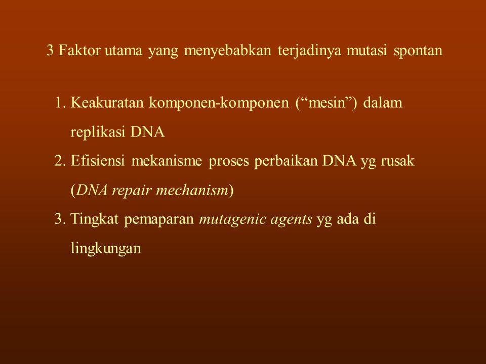 3 Faktor utama yang menyebabkan terjadinya mutasi spontan