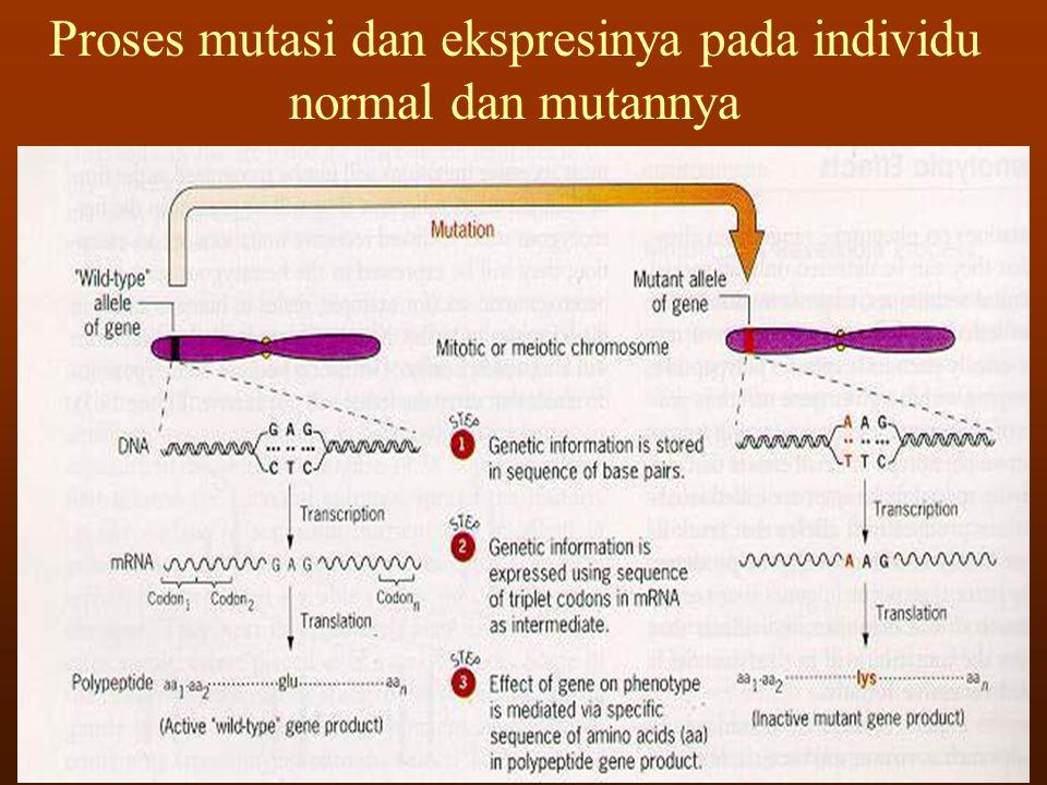 Proses mutasi dan ekspresinya pada individu normal dan mutannya