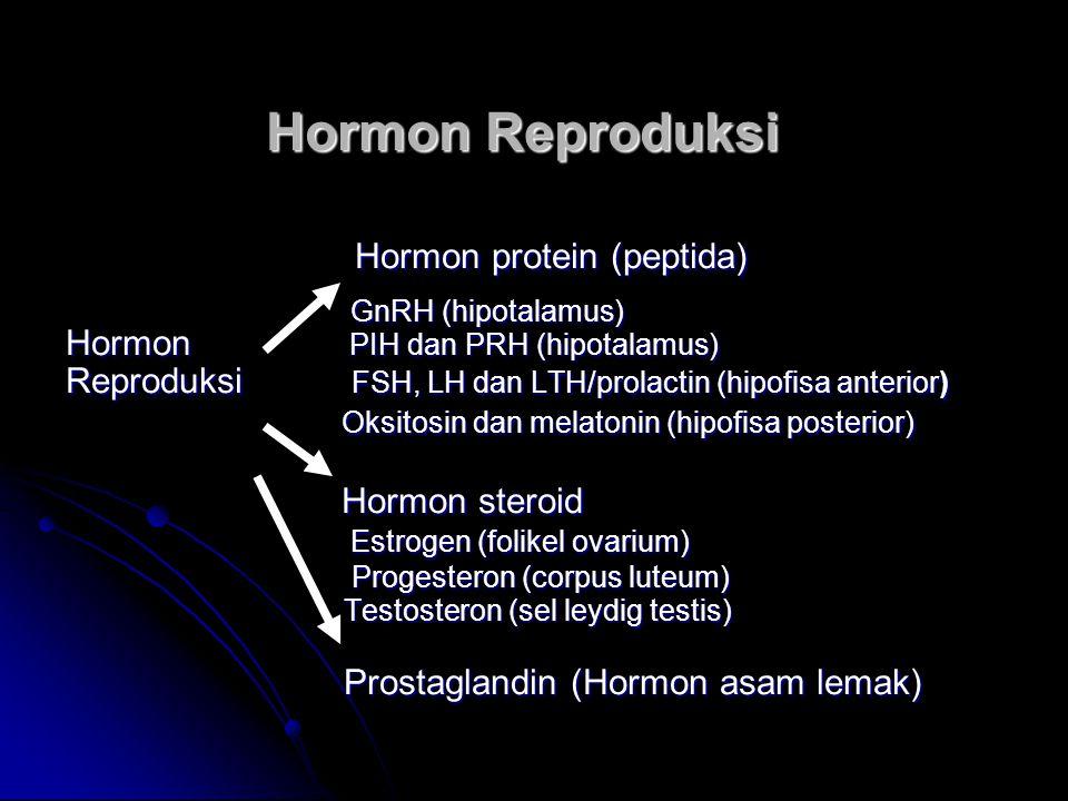 Hormon Reproduksi Hormon protein (peptida)