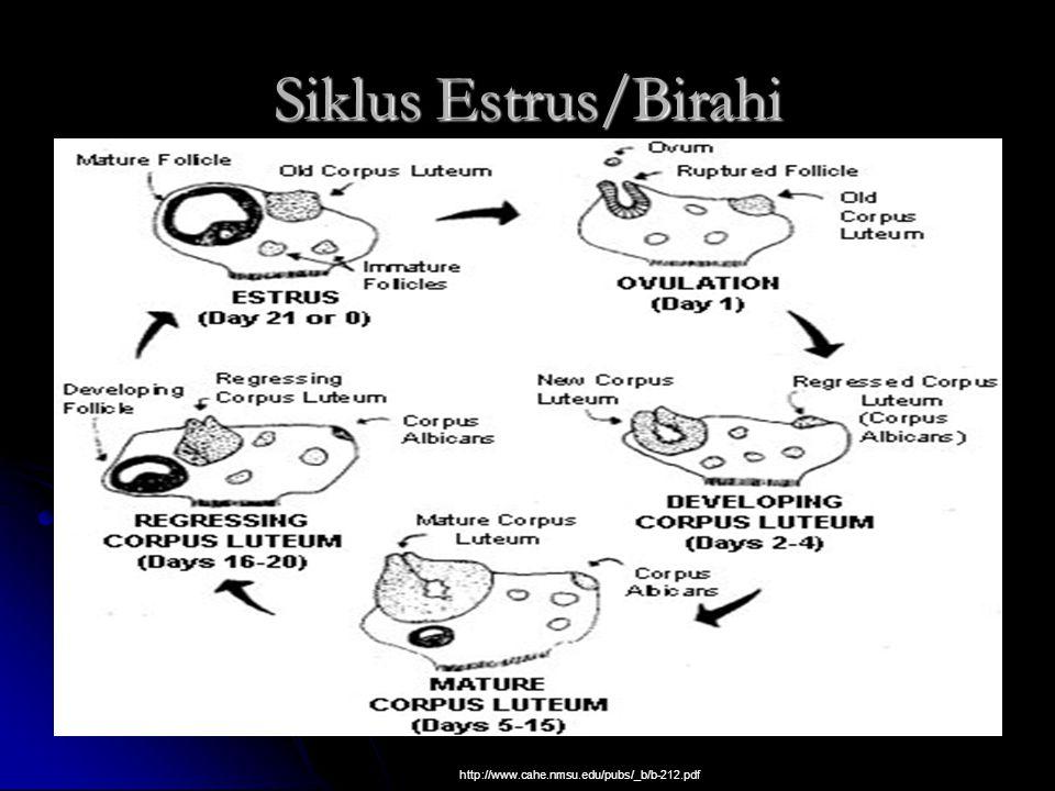 Siklus Estrus/Birahi http://www.cahe.nmsu.edu/pubs/_b/b-212.pdf