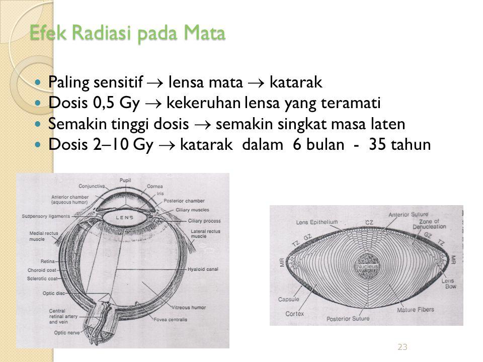 Efek Radiasi pada Mata Paling sensitif  lensa mata  katarak