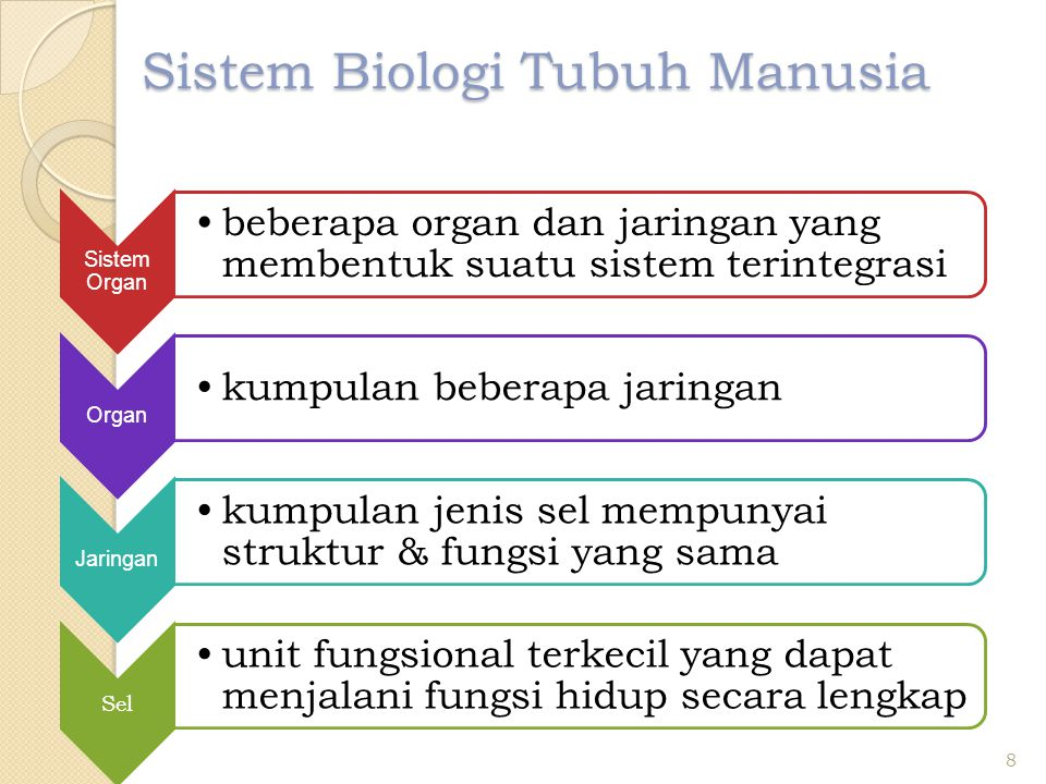 Sistem Biologi Tubuh Manusia