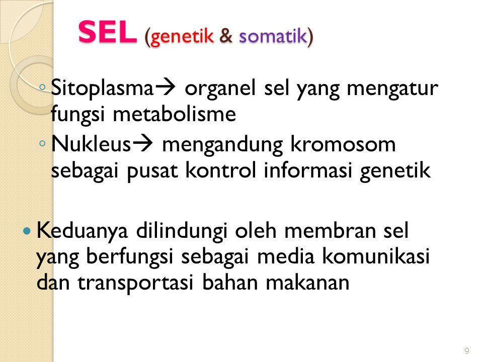SEL (genetik & somatik)