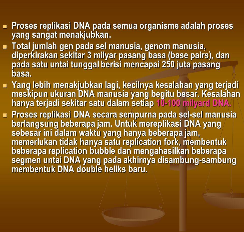Proses replikasi DNA pada semua organisme adalah proses yang sangat menakjubkan.