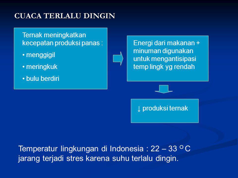 CUACA TERLALU DINGIN Ternak meningkatkan kecepatan produksi panas : menggigil. meringkuk. bulu berdiri.