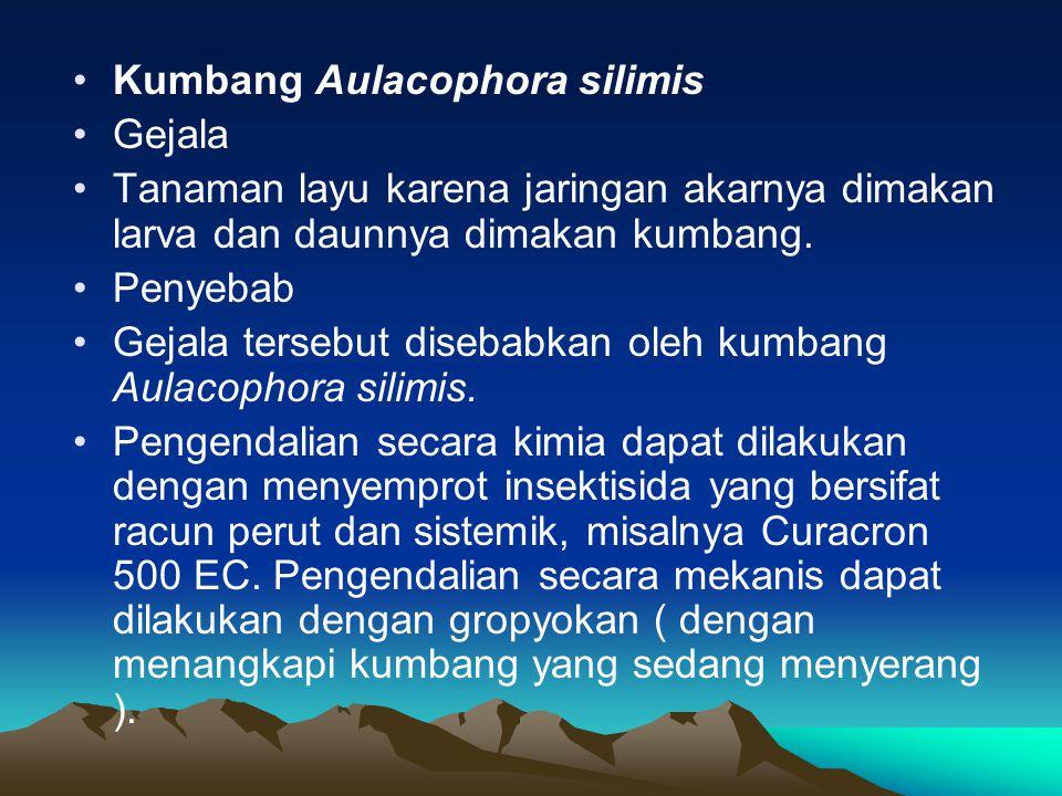Kumbang Aulacophora silimis