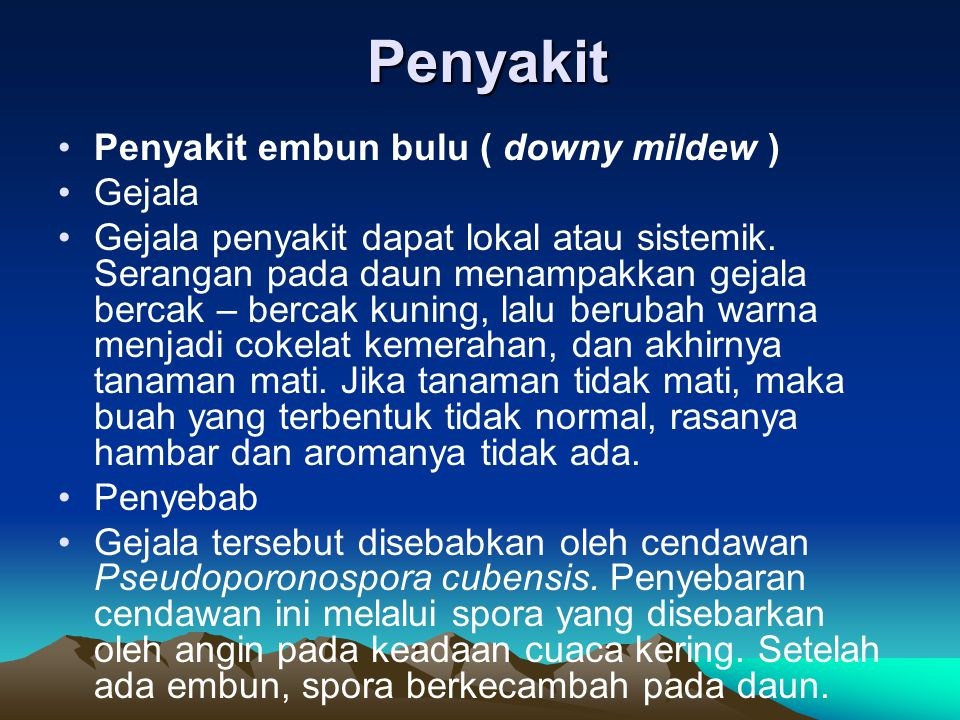 Penyakit Penyakit embun bulu ( downy mildew ) Gejala