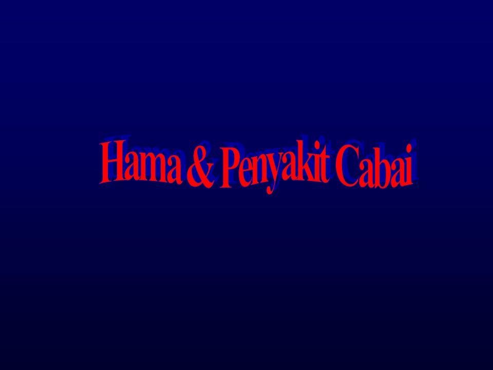Hama & Penyakit Cabai