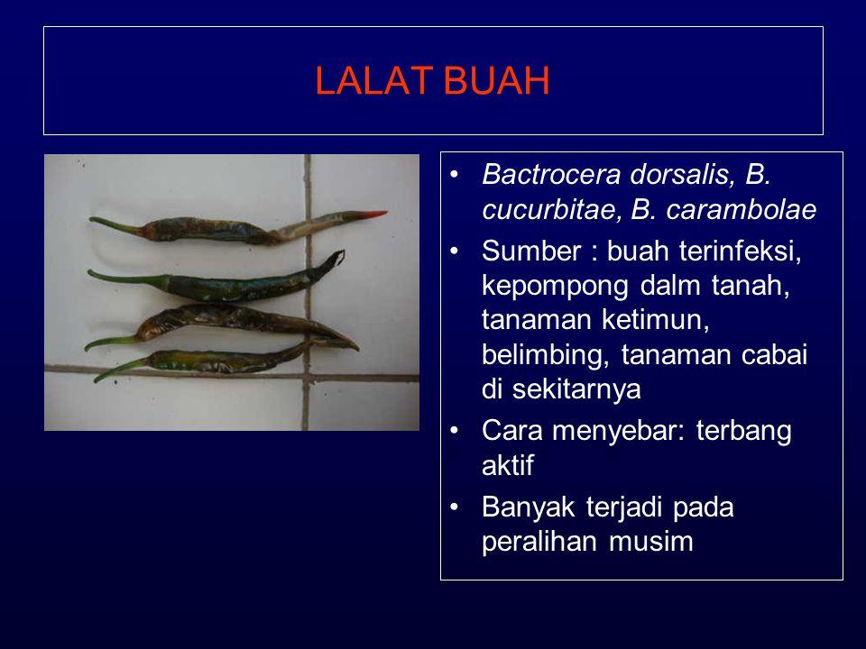 LALAT BUAH Bactrocera dorsalis, B. cucurbitae, B. carambolae