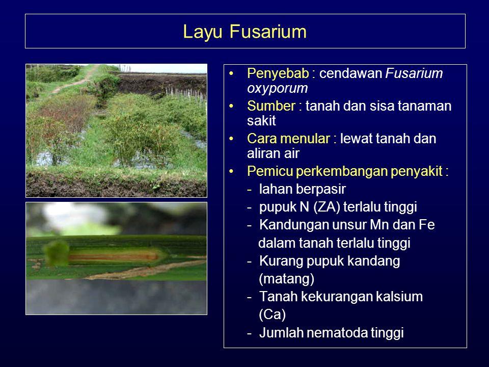 Layu Fusarium Penyebab : cendawan Fusarium oxyporum