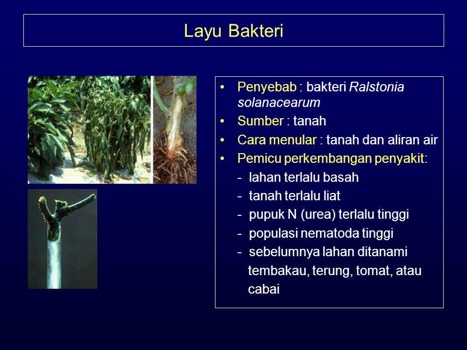 Layu Bakteri Penyebab : bakteri Ralstonia solanacearum Sumber : tanah