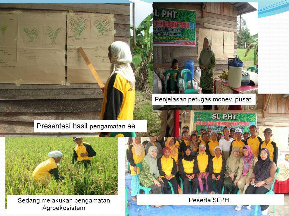 Sedang melakukan pengamatan Agroekosistem