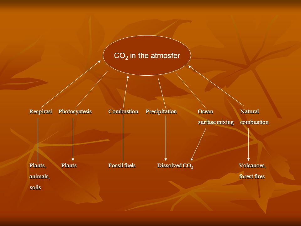 Respirasi Photosyntesis Combustion Precipitation Ocean Natural