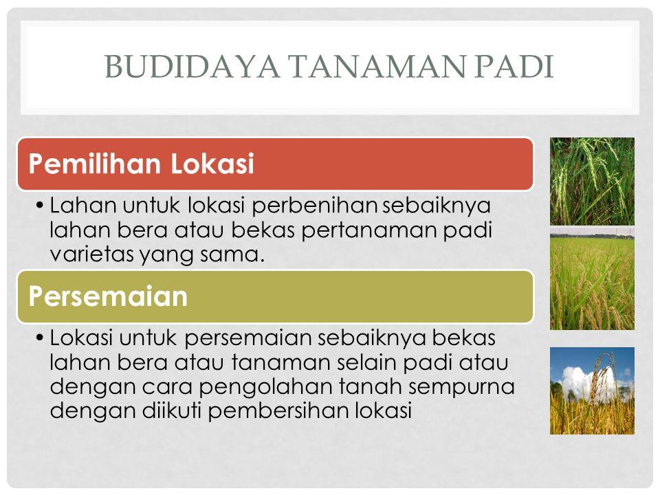 Budidaya tanaman padi Pemilihan Lokasi Persemaian
