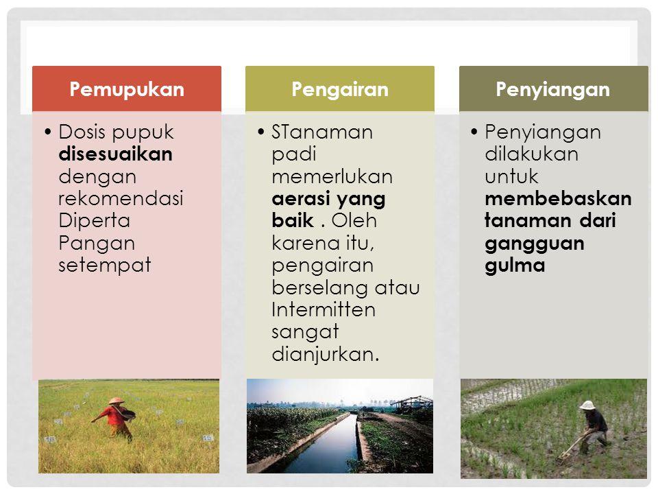 Pemupukan Dosis pupuk disesuaikan dengan rekomendasi Diperta Pangan setempat. Pengairan.