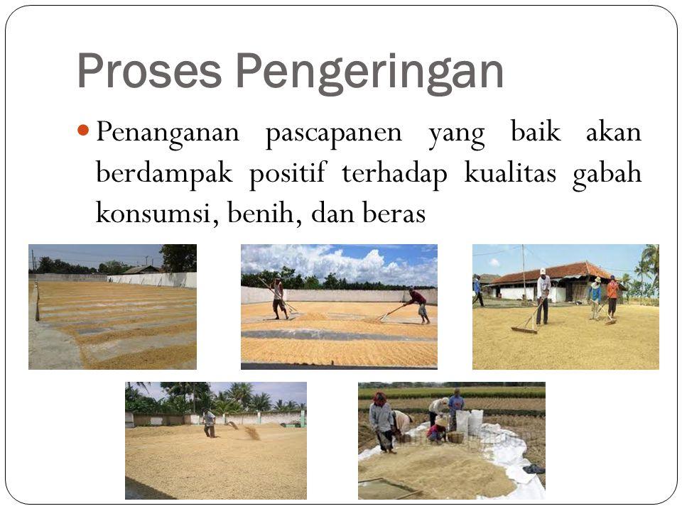 Proses Pengeringan Penanganan pascapanen yang baik akan berdampak positif terhadap kualitas gabah konsumsi, benih, dan beras.