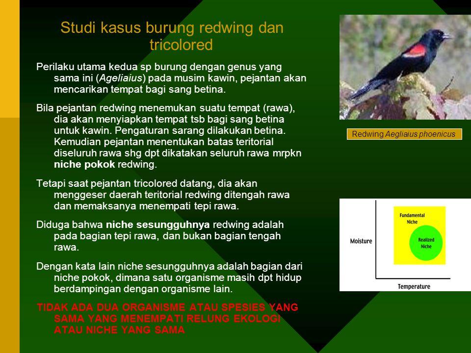 Studi kasus burung redwing dan tricolored