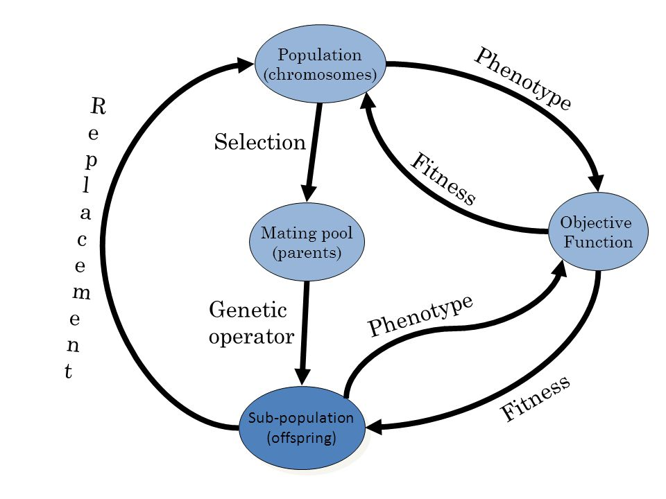 Phenotype Replacement Selection Fitness Phenotype Genetic operator