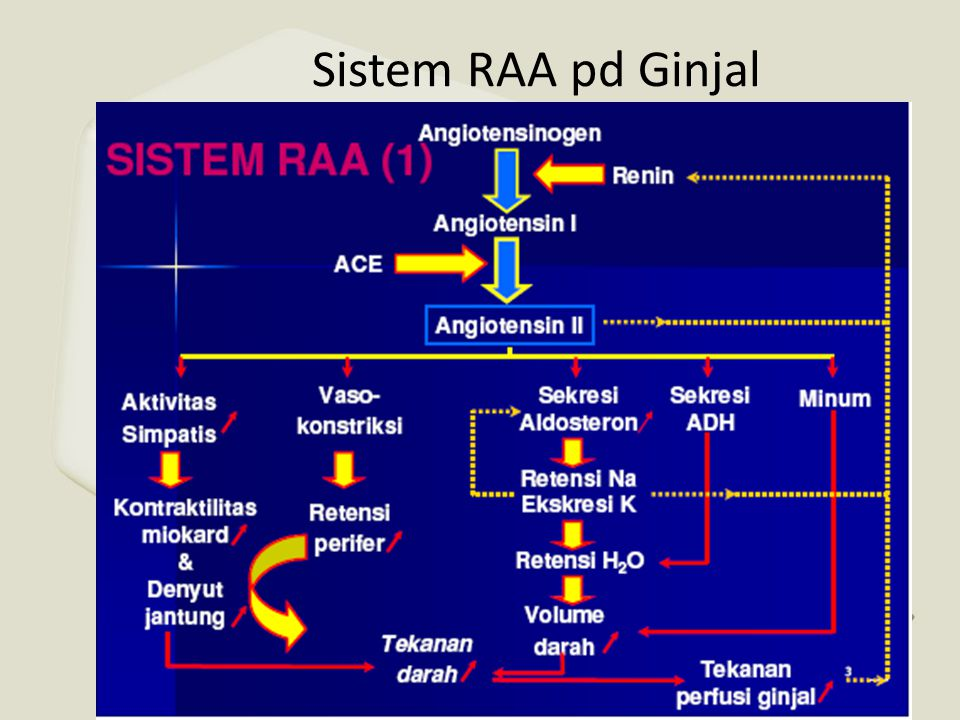 Sistem RAA pd Ginjal