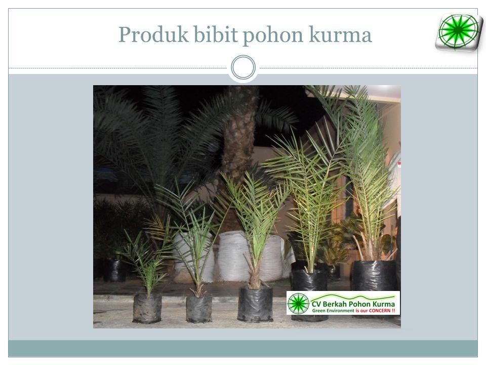 Produk bibit pohon kurma